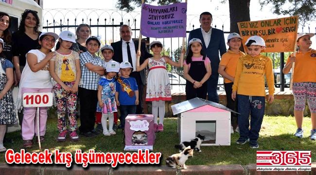 Minik öğrenciler sokak kedileri için ev yaptı, belediyeye teslim etti