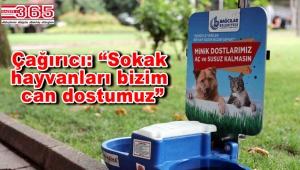 Bağcılar'daki parklarda sokak hayvanlarına su ve mama hizmeti...