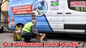 Bahçelievler Belediyesi, sokak hayvanlarını unutmadı